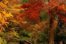autumn..my favorite time of year / by Christy Glover