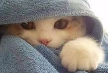 Awww, Sweet Pets / most adorable pictures of pets and owners