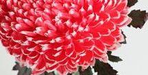 *|* Haute~House *|* / !toutes les jolies fleurs!