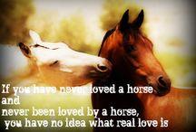 Horses=the other half of my heart  / by Korey Espensen