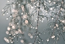 Winter Wonderland / all things are beautiful in winter