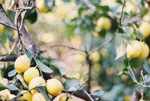 J'adore les Citrons