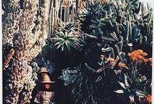Cactaceae / ...and Succulents...