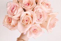 *вℓσσм* / Flowers