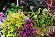 How does your garden grow? / conservatory....English garden....stone...wrought iron...ivy...color!!! / by Nancy T