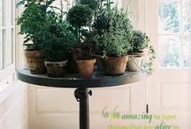Landscape & Plant Life