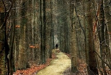 Exploring Pathways / We shall not cease from exploration. And the end of all our exploring will be to arrive at where we started. And know the place for the first time.      T. S. Eliot    / by Jane Hudak
