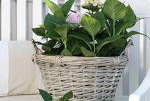 Basket Cases / by Kathy Stevens