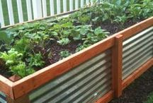 Garden Projects and DIY / by Jennifer Iyengar