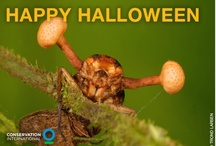 Tricks and Treats / Did you know that species are the building blocks of the healthy ecosystems we all rely on?  In the spirit of Halloween, we've picked a few of the most incredible species on Earth to celebrate. These graphics highlight their tricks (amazing facts about the species) and treats (amazing things that these species do for people)!