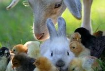 Easter Song  / Hear the bells ringing, they're singing that we can be born again.  ~ Anne Herring / by Kathy Stevens