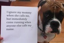 Pet Shaming / The very best of the Pet Shaming collections!