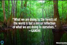 Favorite Quotes