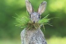 Bunny, Is That You? / by Kathy Stevens