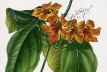 Botanical Art / by Kathy Stevens