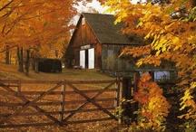 Autumn / by Sandy McClay