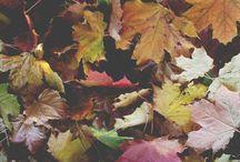Autumn / Fall, Halloween & Thanksgiving