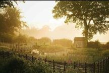 Country Life / by Andrea Schreiber