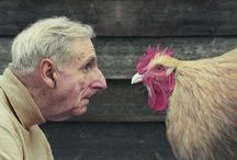 chicken lust / by Shannon Griswold