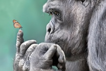 Gorillas, monkeys, etc / Primates