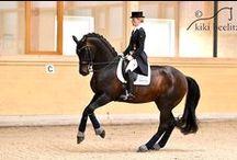 Sport / Hanoverian horses Hannoveraner Breeding Sporthorses, Dressage Showjumping Verden Auction #HannoveranerVerband