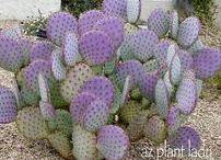 Cactus & Succulent Garden / Succulent and cactus plants for my garden