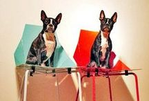 The Modern Dog / Because dogs love modern furniture, too. / by YLiving