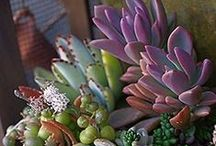 Garden: Cacti and Succulents / by Patty Flagler