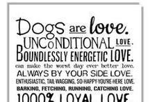 Love Our Dogs / All things for or about our sweet dogs. / by Julie Neerings