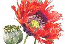 Illustration: Scientific & Botanical / by Patty Flagler