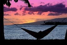 Hawaii Hammock Between Two Palm Trees / by HOME SHOPPE HAWAII - Oahu Real Estate Services