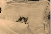 Miaow!! / by Rachel Love Cameron