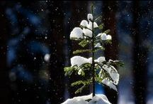 Seasons Ever Changing / Events and Holidays / by Julie Lynn ♡