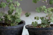Gardenaceae / by Rachel Love Cameron