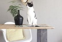 The Modern Cat / Because cats have standards for modern furniture, too. / by YLiving
