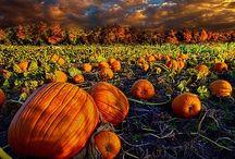 Falling for Fall / Autumn <3