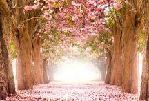 Springing Forward / Spring time celebrations and nature