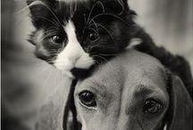 Pet botherer