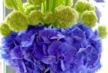 Floral Arrangements & Centrepieces / by Christina Robertson