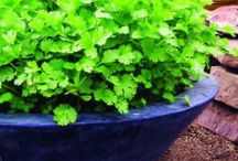 The Land: Gardening, Landscaping, Composting, etc. / Growing stuff to eat or to look pretty.  / by Kimberly Buford