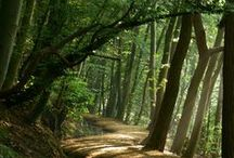 TREES, LEAVES,.. ..
