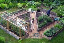 Gardening & Outdoorsy  / by Amalia Jankord