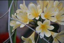 Roses,Clivias ,orchids, irises