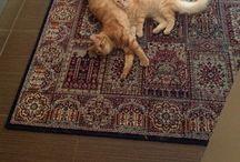 Cat / Soni and Foxy
