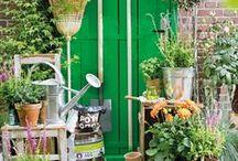 Intratuin | Ideeën voor een vrolijk entree / Groen bij de voordeur zorgt direct voor een warm welkom. Op dit bord vind je inspirerende ideeën om van jouw voordeur een spetterend entree te maken!