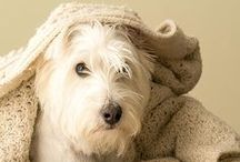 Westie Love / by Funky Monkey