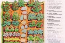 In the Garden / Tips and tricks for successfully feeding ourselves and the environment.