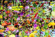 Focus on: Flowers & Foliage