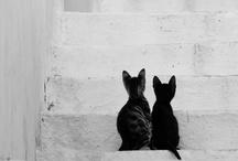 Animals & Friends