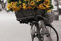 Imagens Bicicletas Com Muito Charme